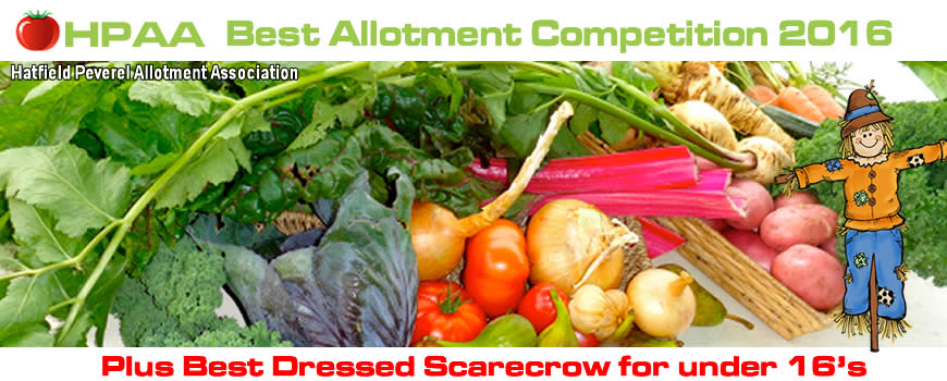 Best Allotment Competition 2016! - 2nd July 2016 Starting at 11.30am