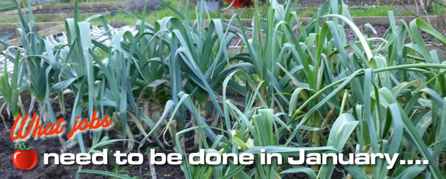 Jobs to do on the Allotment in January