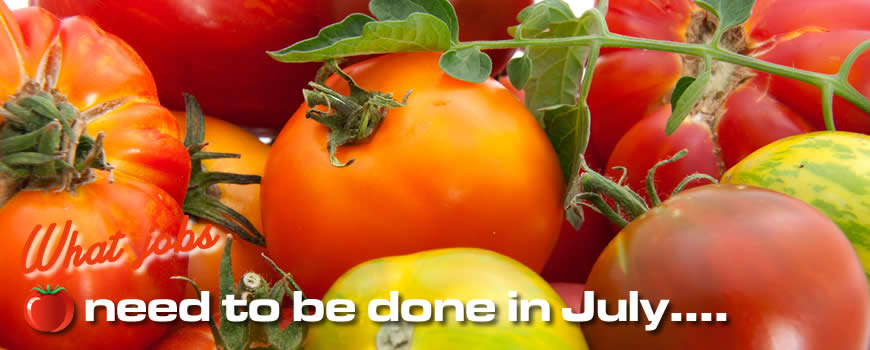 Jobs to do in July