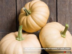 Autumn Crown F1 Squash