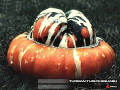 Turks Turban Winter Squash