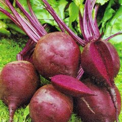 Crimson King Beetroot