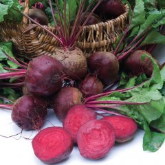 Moneta Beetroot