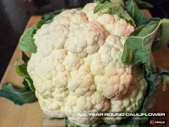 All The Year Round Cauliflower