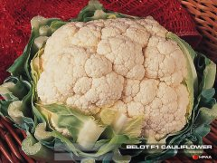 Belot F1 Cauliflower