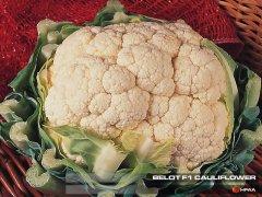 Belot F1 Cauliflower