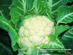 Medallion F1 Cauliflower