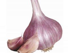 Red Donetsk (Hardneck) Garlic