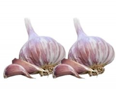 Red Duke (Hardneck) Garlic