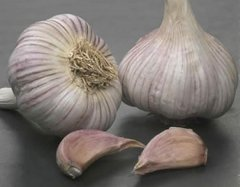 Tuscany Wight Garlic