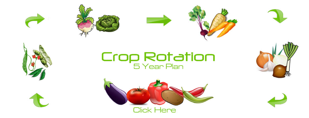 Crop Rotation: A Five-Year Plan