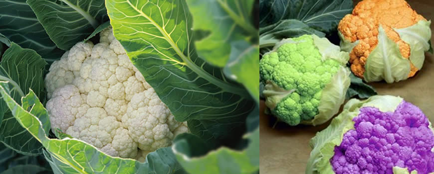 Cauliflower Growing