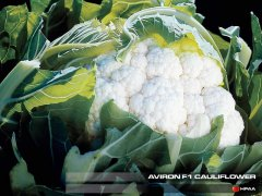 Aviron F1 Cauliflower