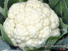 Barcelona F1 Cauliflower