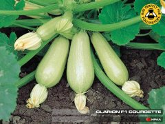 Clarion F1 Courgette (Lebanese Type)