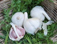 Vallelado Garlic (softneck)