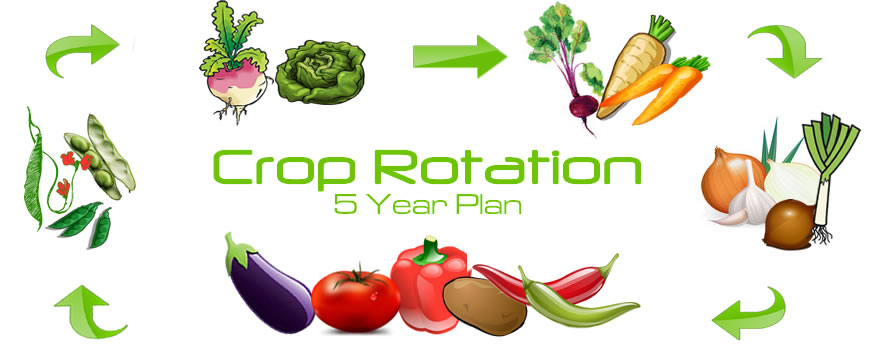 5 Year Crop Rotation Plan